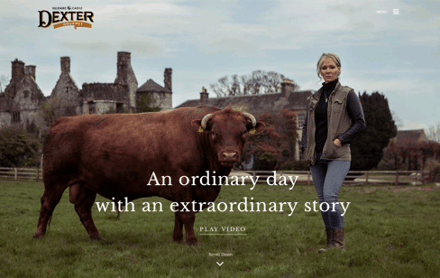 Killenure Dexter Beef Web Design