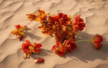 Fine Blooms Florist Web Design